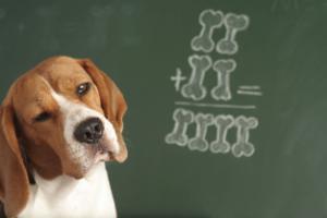 Adding beagle