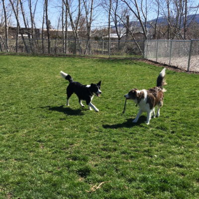 Paige Dodd's dogs play in the park