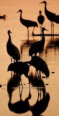 birds_clipart