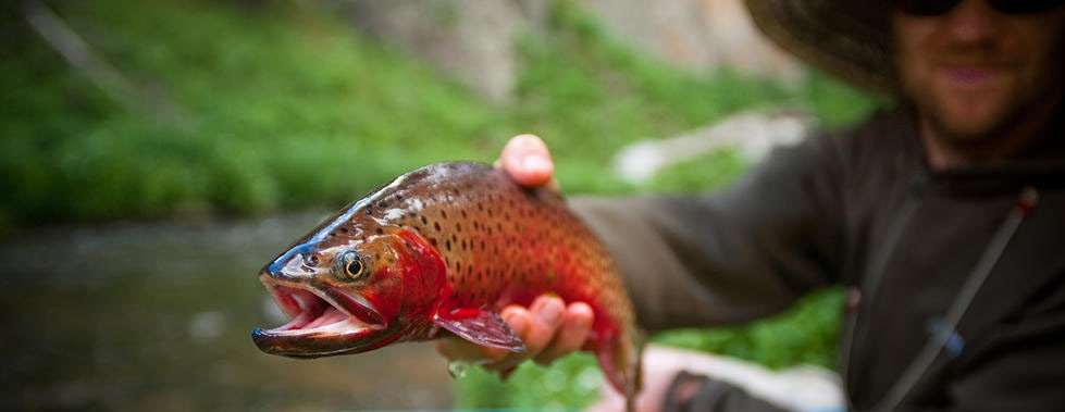 Cameron Scott fly fishing