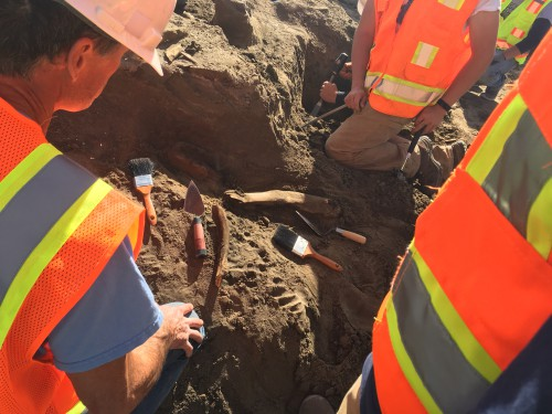 Faculty, students uncover mammoth