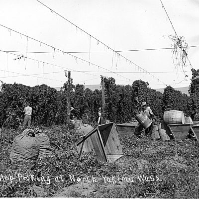 Hop-growing history reflects the PNW of today